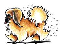 Pekingese Hairifying