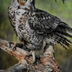 """""""Great Horned Owl on Branch"""" by DBenoit"""