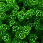 """Flora Abstract"" by dkocherhans"