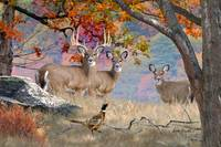 Whitetail Deer Art - October Whitetails