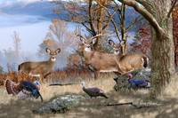 Whitetail Deer Art - November Whitetails