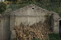 Demolished Building with Drying Corn Stalks