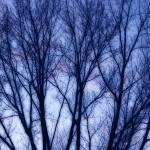 """""""Web of Trees"""" by SplitWindow"""
