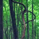 """""""Bow Tree"""" by SplitWindow"""