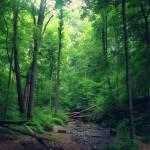 """""""Fallen Trees with Light"""" by SplitWindow"""