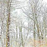 """""""Snowy Woods"""" by SplitWindow"""