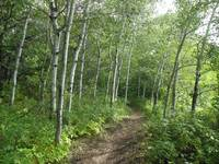 Quaking Aspen Trail