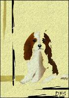 2 - Mercedes - Our Cavalier King Charles Spaniel