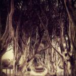 """the dark hedges"" by samos"