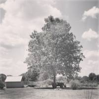 Tree and Tractor Art Prints & Posters by Kelly Parrish Jones