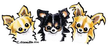 Longhaired Chihuahua Trio