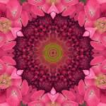 """""""Soul Sister Mandala"""" by SeaAngel12"""