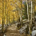 """Colorado Images - Aspen Path, Rocky Mountain Natio"" by RobGreebonPhotography"