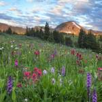 """Colorado Wildflower Images - Morning in Colorado"" by RobGreebonPhotography"