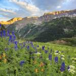 """Colorado Wildflower Images - Yankee Boy Summer 2"" by RobGreebonPhotography"