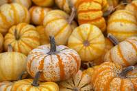 Texas Hill Country Images - October Pumpkins 5