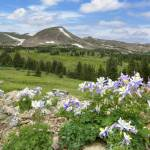 """Colorado Wildflower Images - Columbine Late Mornin"" by RobGreebonPhotography"