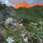 """Maroon Bells Images - Columbine at Sunrise 1"" by RobGreebonPhotography"