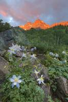 Maroon Bells Images - Columbine at Sunrise 1