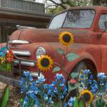 """Bluebonnets and and Old Dodge Truck"" by RobGreebonPhotography"