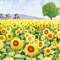 Sunflowers & bicyclists Art Prints & Posters by Kathy Johnson
