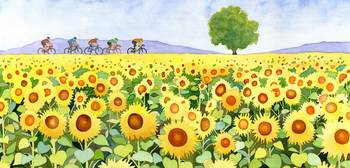 Sunflowers & bicyclists