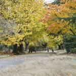 """""""Autumn Walks_7702"""" by nwartanddesign"""
