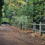 """""""Autumn Walks_7254"""" by nwartanddesign"""