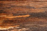 Wood Grain in Eucalyptus