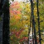 """Autumn in the forest"" by MariaK"