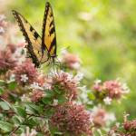 """Butterfly Bokeh"" by julieandel"