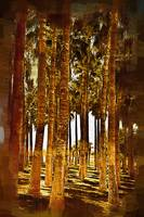 Palm Tree Grove