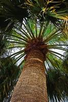 The Big Palm