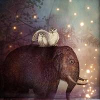 Riding through the Night Art Prints & Posters by Catrin Welz-Stein