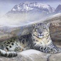 out of the wind-- snow leopard Art Prints & Posters by r christopher vest