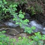 """Rushing creek"" by MariaK"