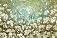 white poppies landscape