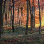 """Golden Autumn Woodland Dawn"" by CeriJones"