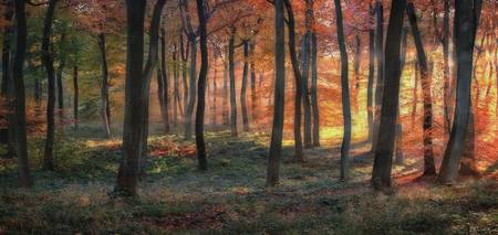 Golden Autumn Woodland Dawn