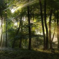 Sun Burst in the Woods Art Prints & Posters by Ceri Jones