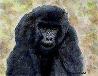 Curious_Young_Male_Gorilla
