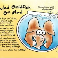 Bowled Goldfish Go Mad Art Prints & Posters by Ben Isacat