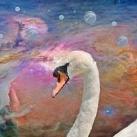 Spirit of the Swan Art Prints & Posters by Kathy Rinker