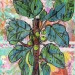"""Fig Tree Botanical"" by schulmanart"