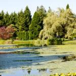 """""""The Lagoon in VanDusen"""" by raetucker"""
