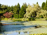 The Lagoon in VanDusen
