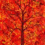 """""""Fall"""