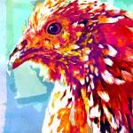 """""""Hen-Pecked"""" by Larissa"""