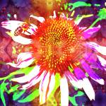 """Coneflower Power"" by Larissa"