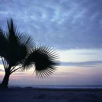 Tropical palm tree on beach Ibiza silhouette dusk